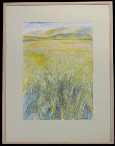 Canterbury wheat fields